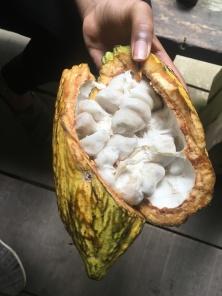 Cocoa!!!!